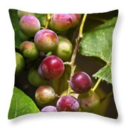 Sweet Grapes Throw Pillow by Christina Rollo
