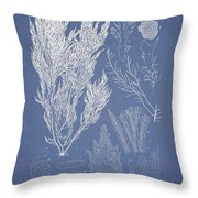 Symphocladia Linearis Throw Pillow by Aged Pixel
