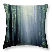 T. Bonderud Path Through Trees In Mist Throw Pillow by First Light