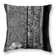 Taking Refuge Throw Pillow by Angie Vogel