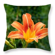 Tangerine Lily Throw Pillow by Will Borden