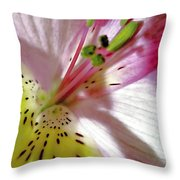 Tender Lily With Shadow Throw Pillow by Danielle  Parent