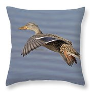 The Approach Glide Throw Pillow by Jim Nelson