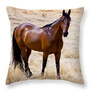 The Big Bay Throw Pillow by Michelle Wrighton