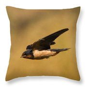First Swallow Of Spring Throw Pillow by Robert Frederick