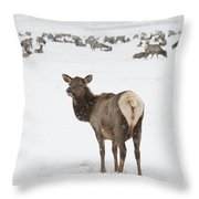 The Gathering Throw Pillow by Sandra Bronstein