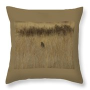 The Hawk 2 Throw Pillow by Ernie Echols