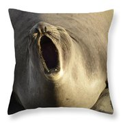 The Singing Seal Throw Pillow by Bob Christopher