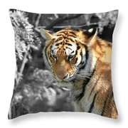 The Tiger Throw Pillow by Dan Sproul