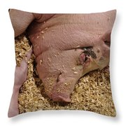 This Little Piggy Throw Pillow by Luke Moore