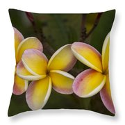 Three Pink And Yellow Plumeria Flowers - Hawaii Throw Pillow by Brian Harig