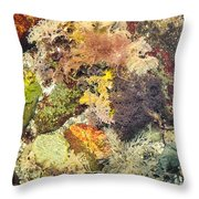 Tidal Pool Color Throw Pillow by Debbie Green