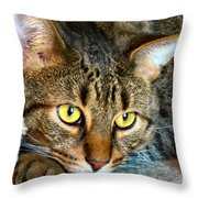 Tiger Time Throw Pillow by Michelle Milano