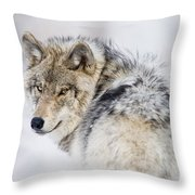 Timber Wolf Pictures 1268 Throw Pillow by World Wildlife Photography