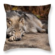 Timber Wolf Pictures 945 Throw Pillow by World Wildlife Photography