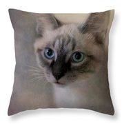 Tomcat Throw Pillow by Priska Wettstein