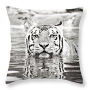 Top Cat Throw Pillow by Scott Pellegrin