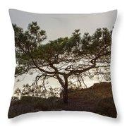 Torrey Pine Tree Throw Pillow by Darleen Stry