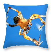 Trapeze Spider Throw Pillow by Christina Rollo