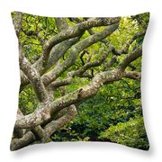 Tree #1 Throw Pillow by Stuart Litoff