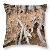 Tree Root Throw Pillow by Matthias Hauser