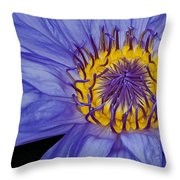 Tropical Day Flowering Waterlily Throw Pillow by Susan Candelario