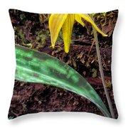 Trout-Lily Erythronium americanum Throw Pillow by Thomas R Fletcher