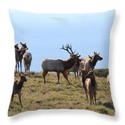 Tules Elks of Tomales Bay California - 7D21236 Throw Pillow by Wingsdomain Art and Photography