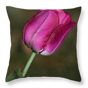Tulip Throw Pillow by Jim Nelson