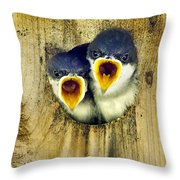Two Tree Swallow Chicks Throw Pillow by Christina Rollo