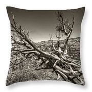 Uprooted - Bryce Canyon Sepia Throw Pillow by Tammy Wetzel