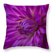 Very Pink Dahlia Throw Pillow by Garry Gay