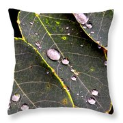 Water Drops Leaves Throw Pillow by Daniel Janda