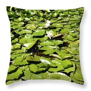 Water Lillies Throw Pillow by Les Cunliffe