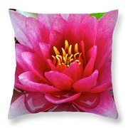 Water Lilly Throw Pillow by Frozen in Time Fine Art Photography