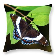 White Admiral Butterfly Throw Pillow by Christina Rollo