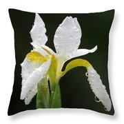 White Iris Throw Pillow by Juergen Roth