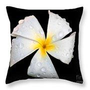 White Plumeria Or Frangipani Flower With Raindrops On Black Throw Pillow by Valerie Garner