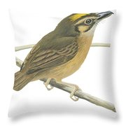 White Throated Spadebill Throw Pillow by Anonymous