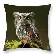 Whooo Goes There... Eastern Screech Owl  Throw Pillow by Inspired Nature Photography Fine Art Photography
