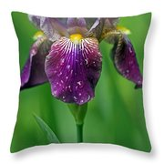 Why Does It Always Rain On Me? Throw Pillow by Juergen Roth