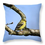 Wild Birds - American Goldfinch Throw Pillow by Christina Rollo