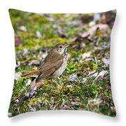 Wild Birds Hermit Thrush Throw Pillow by Christina Rollo