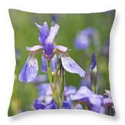 Wild Irises Throw Pillow by Rona Black