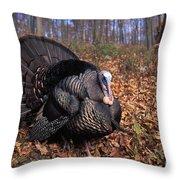 Wild Turkey Displaying Throw Pillow by Len Rue Jr