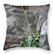 Wildflowers4 Throw Pillow by Aaron Spong