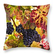 Wine grapes Cabernet Franc Throw Pillow by Garry Gay