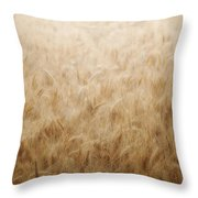 Winsome Wheat Throw Pillow by Amy Tyler