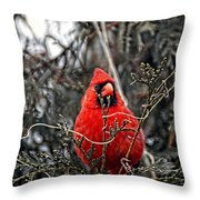 Winter Cardinal 03 Throw Pillow by Thomas Woolworth