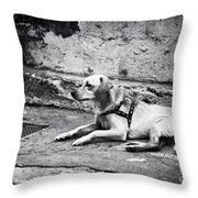 Wishing For A Friend Throw Pillow by John Rizzuto